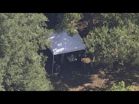 Could Brian Laundrie's Remains Have Been Found in Florida Swamp?