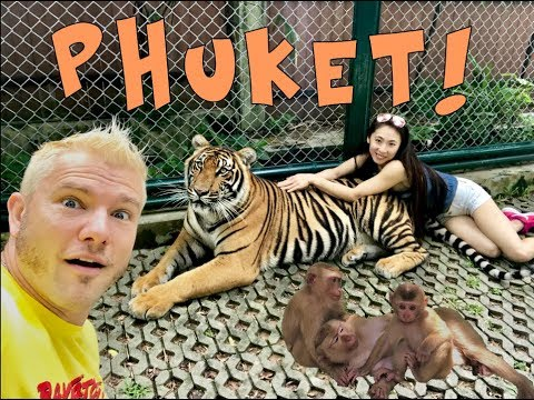 TIGERS AND A HENTAI MONKEY IN PHUKET, THAILAND!