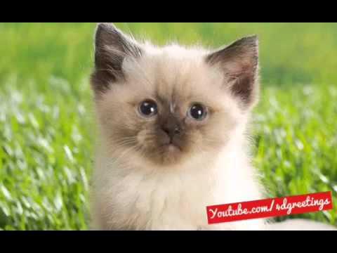 Cat Singing Happy Birthday