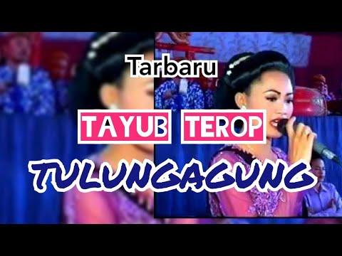 TAYUB TULUNGAGUNG TERBARU GENDUT 2