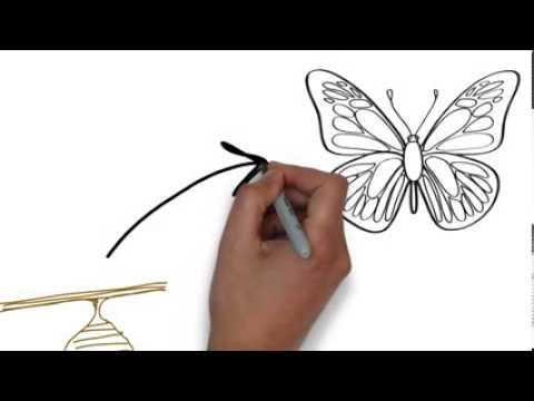 Life Cycle Of A Butterfly Key Stage 1 Example Whiteboard
