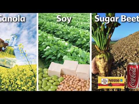 GMO and Its Negative Effects Across the Globe