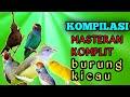 Masteran Kompilasi Untuk Masteran Murai Batu Masteran Kenari Masteran Pleci Masteran Cililin Dll  Mp3 - Mp4 Download