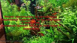 Как подобрать светильник для растительного аквариума