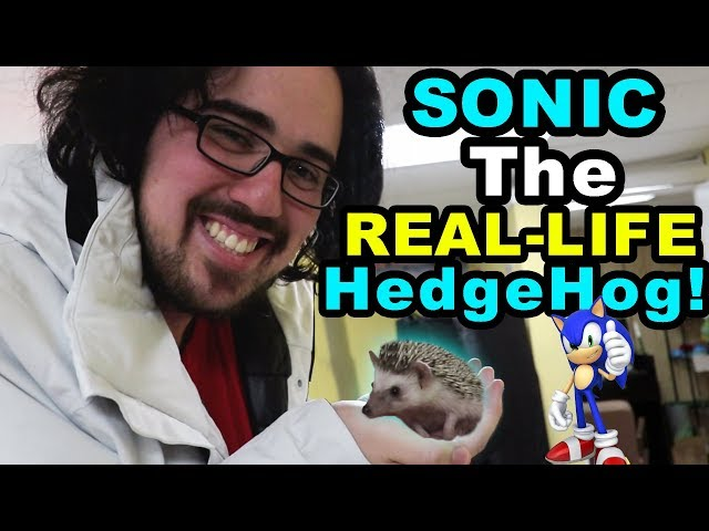 LOGAN GETTING ANOTHER NEW PET?! (A REAL HedgeHog or Snake?)