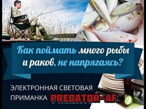 Рыбалка Электронная приманка для рыбы  Predator-AF