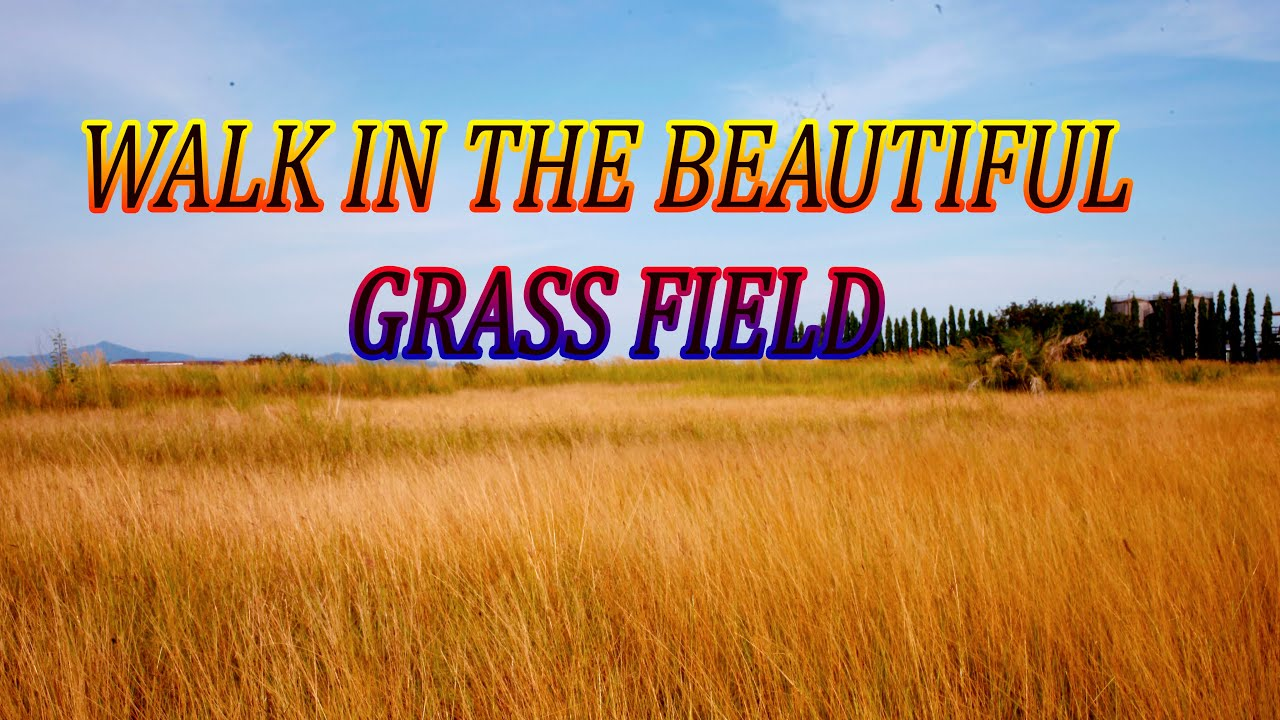 Download WALK IN THE BEAUTIFUL GRASS FIELD