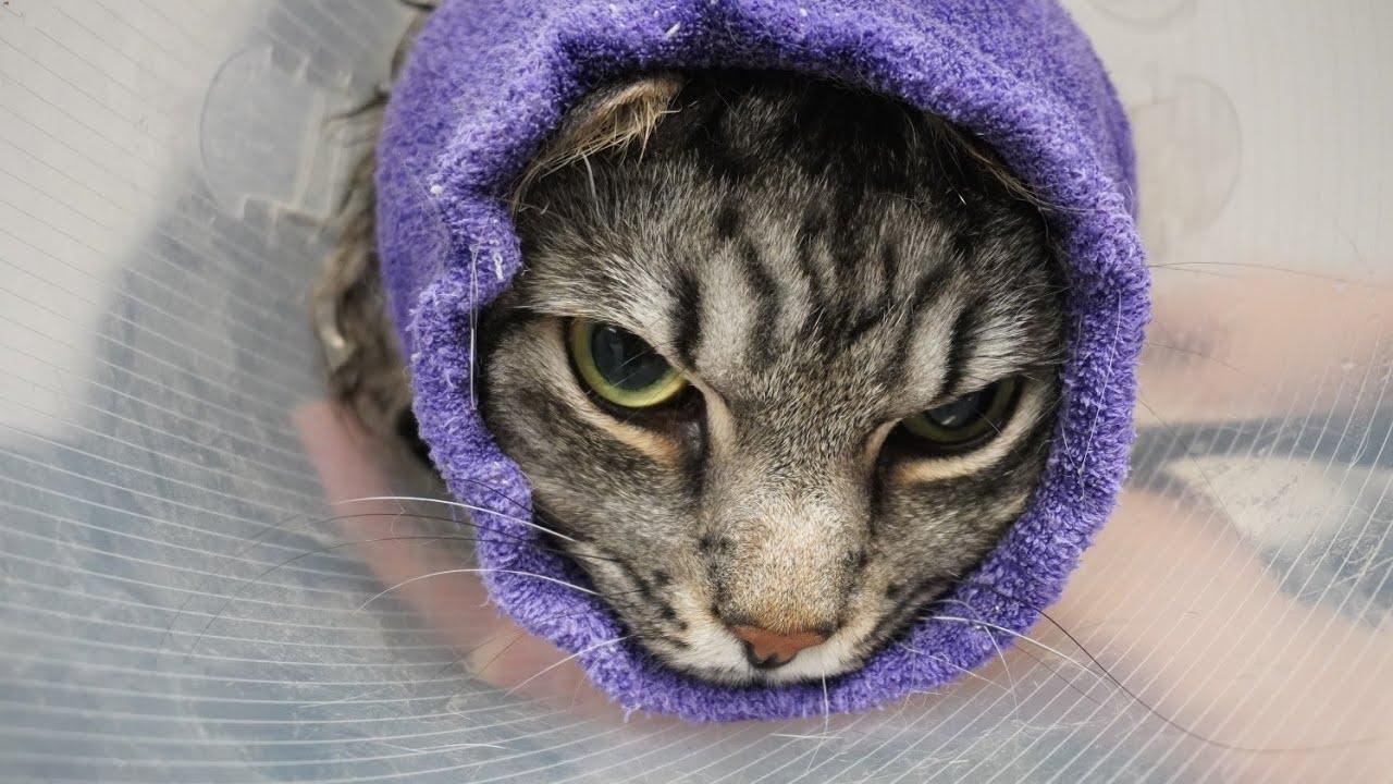 Angry cat plots his revenge