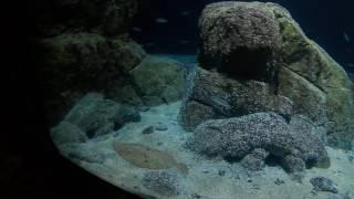 Isaw Edge: Oceanium Diergaarde Blijdorp 17-8-2016