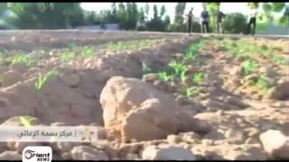 الغوطة الشرقية إطلاق حملة زراعة السبانخ تطبيقاً لشعار لا جوع ولا ركوع