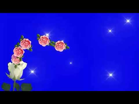green screen effects,green screen,flower animation green screen,green screen video,