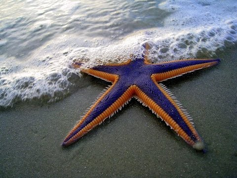 Starry Starfish Beach - Motukiekie Beach HD 2017 HD