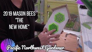 Mason bees of 2019