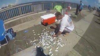Pompano Pier Fishing (Jacks, Runners, and Mackerel)