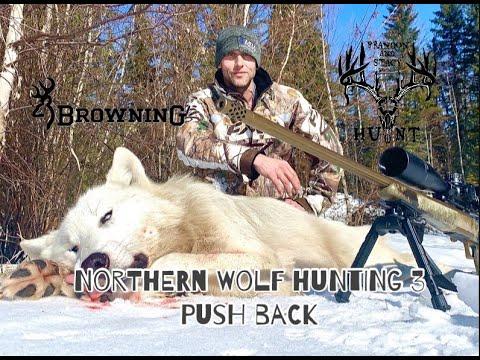 NORTHERN WOLF HUNTING 3 (PUSH BACK)