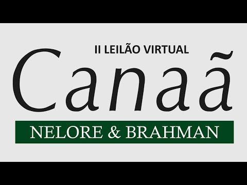 Lote 20   Fiel FIV Al Canaã   NFHC 706 Copy