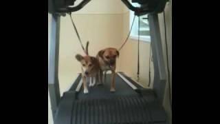 The Local Bark Dog Resort In Rancho Cordova - Dog Jogging Partners