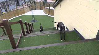 Dogs Trust Manchester - Mags