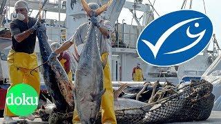 Viele Verbraucher orientieren sich beim Fisch-Kauf an dem blauen MS...