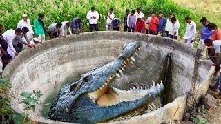 Крокодилы Гиганты, Которых Удалось Заснять на Камеру