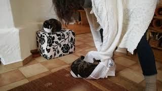 funny fail cat jumping in bag - Lustige Katze springt in Tasche und daneben