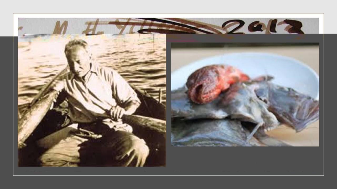 Dülger Balığı Ne Tür Bir Balık Türüdür