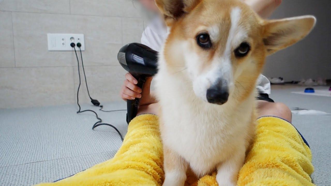목욕 없는 세상에 살고싶은 강아지 (잘가라 머드팩)