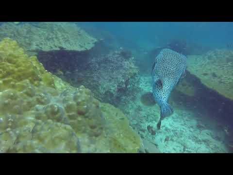 Diving in Thailand: Phi Phi Island