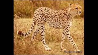Cheetahs, servals, hyenas, crocodiles, vultures