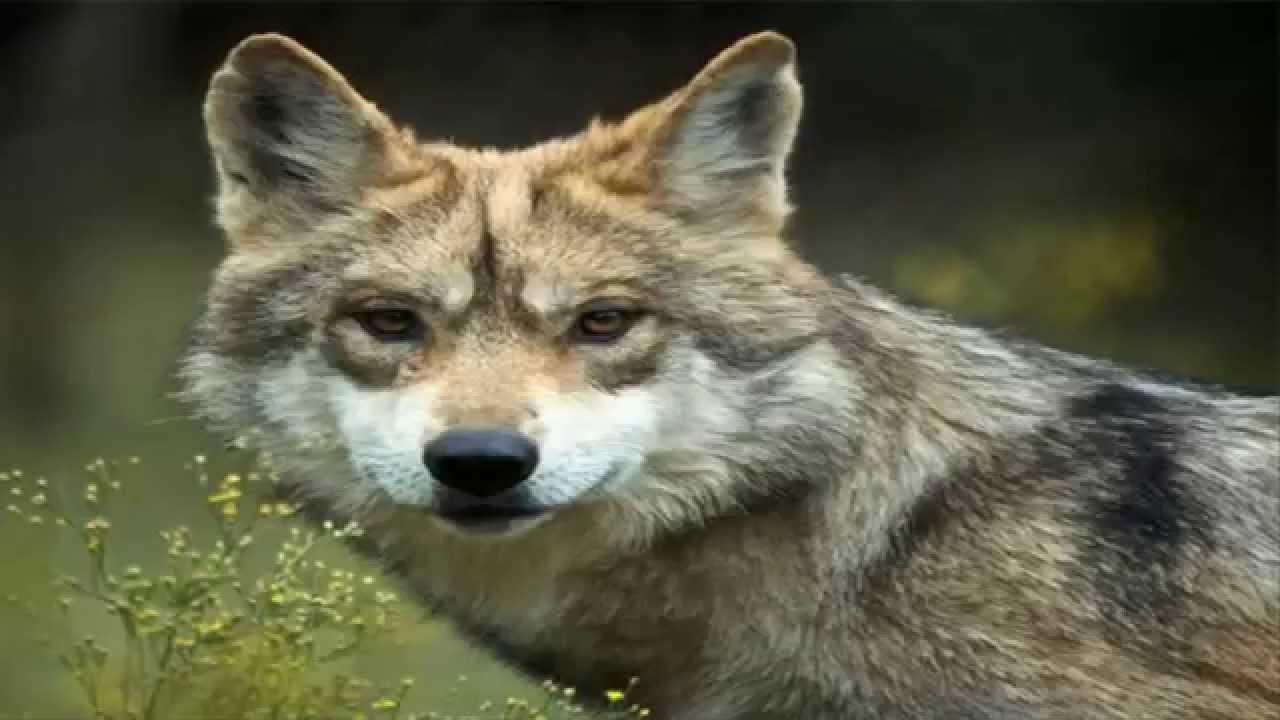 Dia Mundial De Los Aniamles Hay 457 Especies En Peligro De Extincion ...