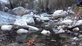 Sabino Canyon to Catalina State Park