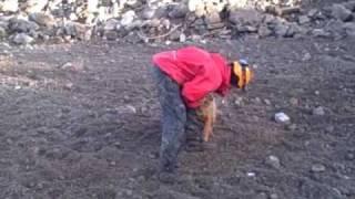 Usar Search Dog Training