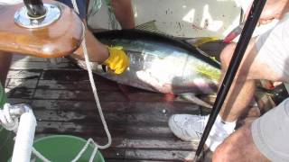 Blood on the Deck:  NJ Tuna Fishing