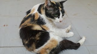 Crazy Cat Playing - Cats Videos - Cat Playing - Cat