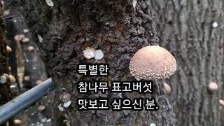 시인의효농장 시인의표고버섯