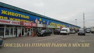 Птичий рынок в Москве