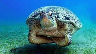 Мой первый опыт в подводном видео и фридайвинге.(Подводный мир красного моря. Фридайвинг и снорклинг, первый опыт., 2015-02-21T16:17:47.000Z)
