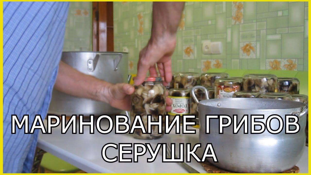 грибы серушка фото и описание