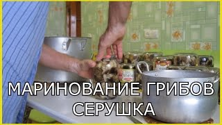 Грибы.Консервация грибов.Грибы серушки.Рецепт маринования грибов на зиму