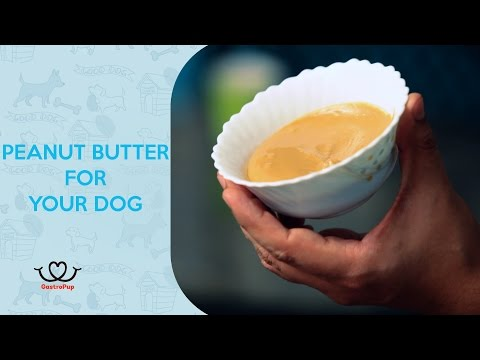 How To Make Peanut Butter For Your Dog || Pet Friendly Desserts || GastroPup