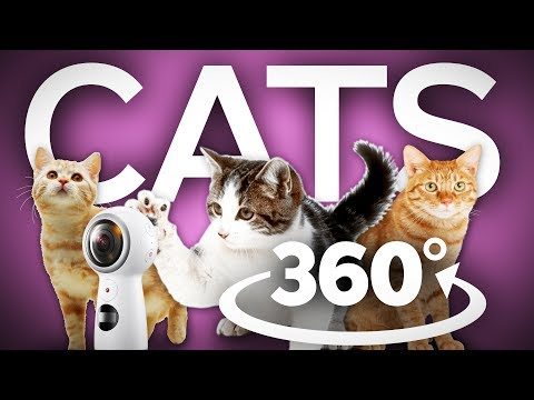 Cute Cats from The Cat Museum in 360
