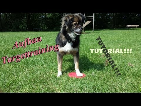 Targettraining! Aufbau mit dem Clicker. Hundetraining, Hundeschule.