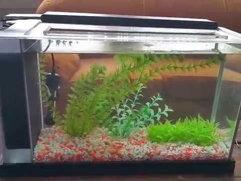 Fluval spec v 5 gallon fish tank review youtube for Fish tank review