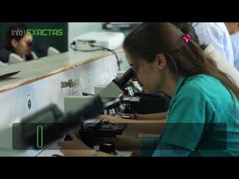 Evalúan potencial genotóxico del ambiente usando cebollas