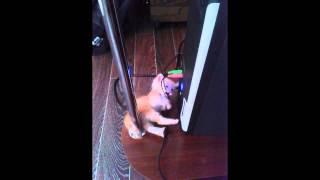кота взял , должен провода отдать