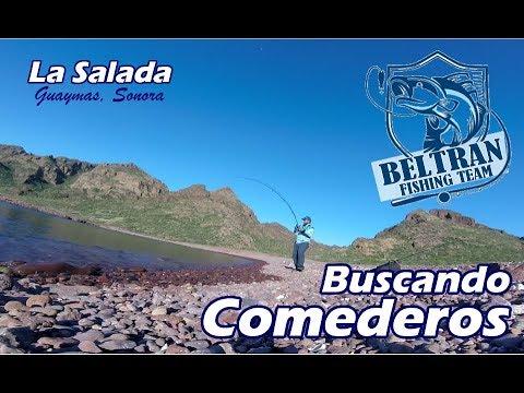 Buscando Comederos | La Salada - Guaymas, Sonora