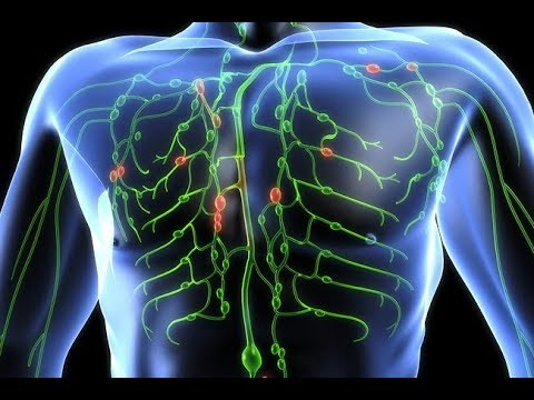 HOW IT WORKS: The Lymphatic System - YouTube