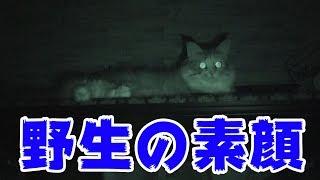 飼い主が寝ている時、猫はどこで寝ているのか?