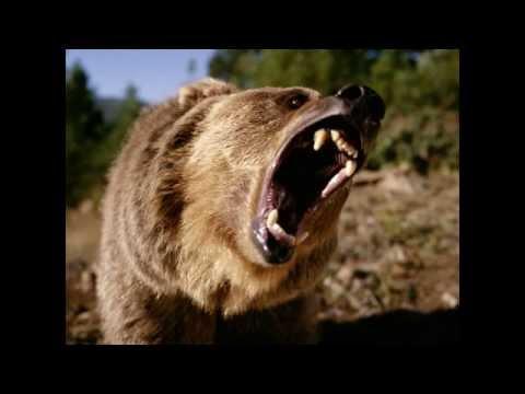 Royal Guardsmen - Bears