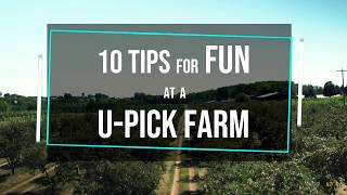 10 Tips for Fun on a U-Pick Farm